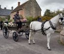 Pony & Country Carriage
